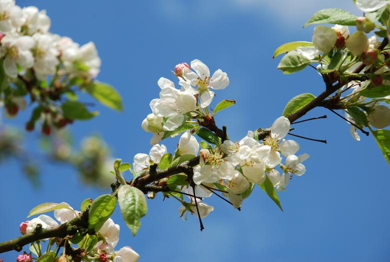 Start van het voorjaar.